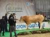 aquitanima-2015-concours-blond-d-aquitaine-22