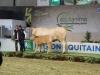 aquitanima-2015-concours-blond-d-aquitaine-93