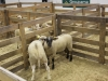 journee-agneau-de-pauillac-bordeaux-2015-064