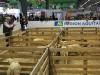 journee-agneau-de-pauillac-bordeaux-2015-081