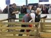 journee-agneau-de-pauillac-bordeaux-2015-101