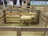 journée de l'agneau de Pauillac à la foire de Bordeaux 2015