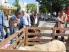 eleveurs-girondins-merignac-paques-2014-081