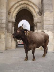 """""""Missou"""" et les Eleveurs Girondins arrivent à Mérignac"""