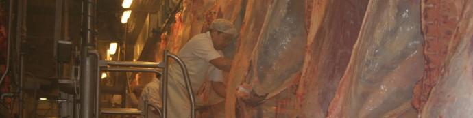 Abattage de carcasses de boeuf à Bordeaux