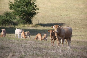 Espace éleveurs