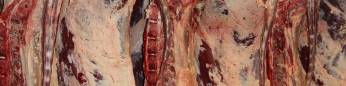 traçabilité des carcasses bovines à l'abattoir de Bergerac