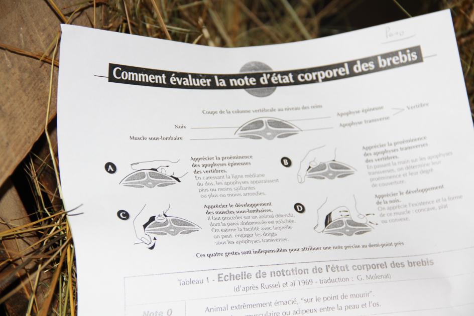 Les Ovinpiades 2015 à Gironde sur Dropt