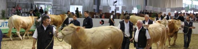 aquitanima-2015-concours-blond-d-aquitaine-18