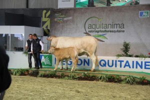 Les adhérents du GEG à Aquitanima 2015
