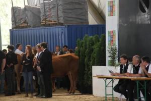 """tournage du film """"La vache"""" avec Jamel Debbouze"""