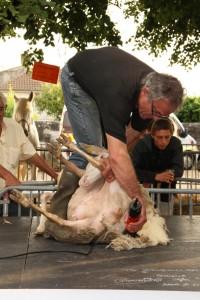 La journée de l'élevage le 12 juin 2015 à Monségur