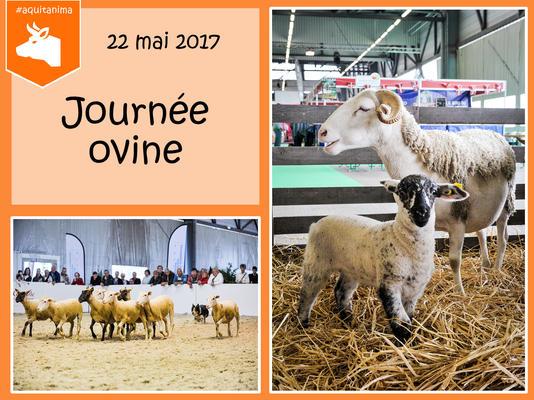 journe-e-ovine_news_image